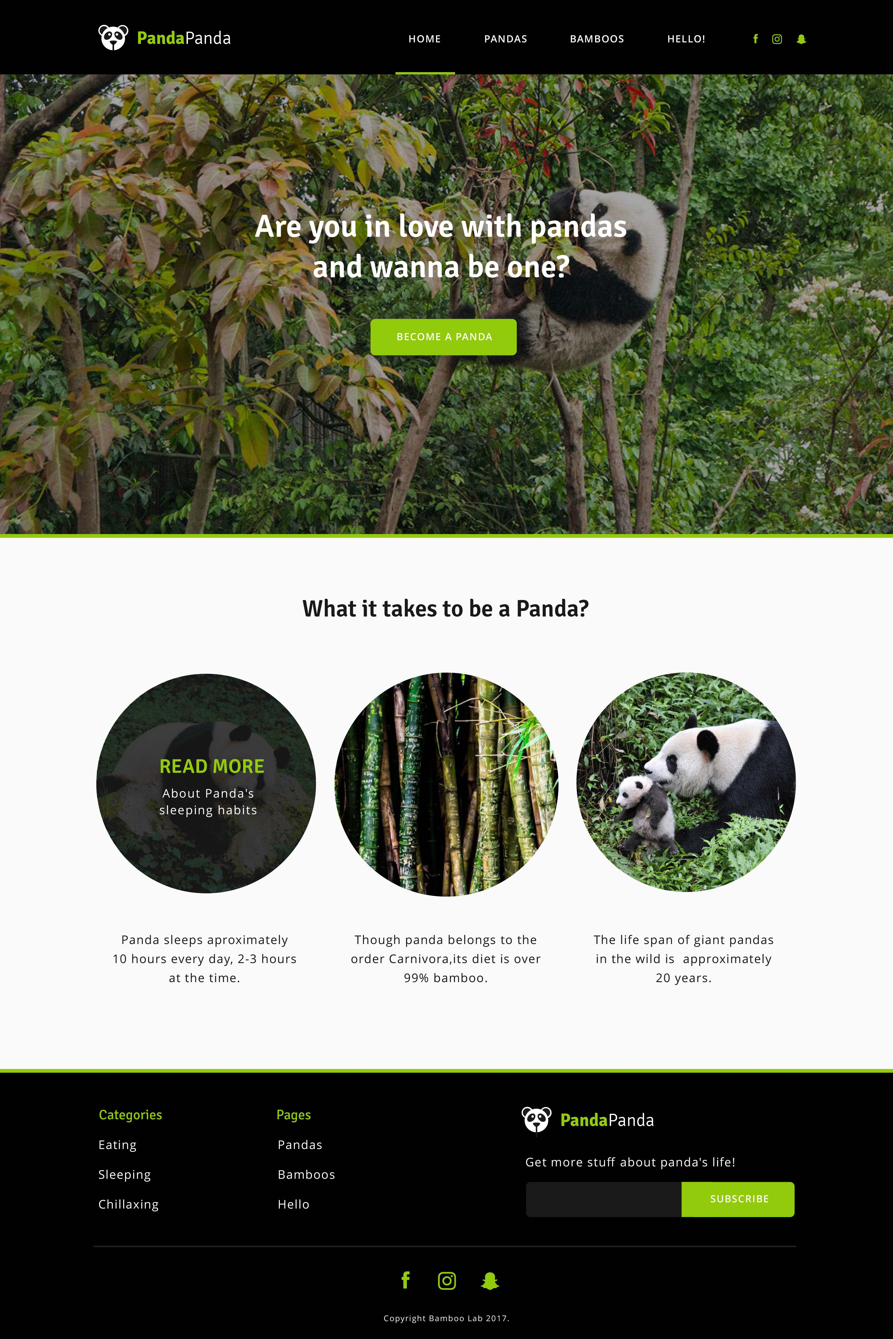 Simple Panda Website Mockup